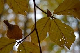 2012-10-23-13.18-010t.JPG